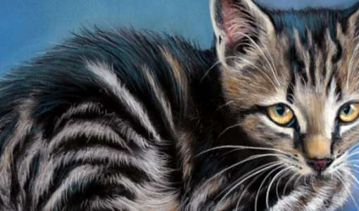 Faszination Tierporträt in Pastell